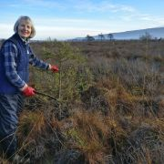 OC_SNH_MC at Flanders Moss scrub management for bog restoration.jpg