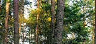 SII_00222_V1_OTH_Forest_Dunkeld_LR_1.jpg.axd.jpeg